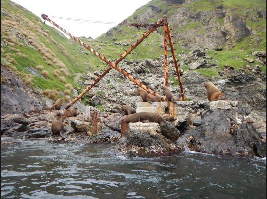 Seals at landing spot
