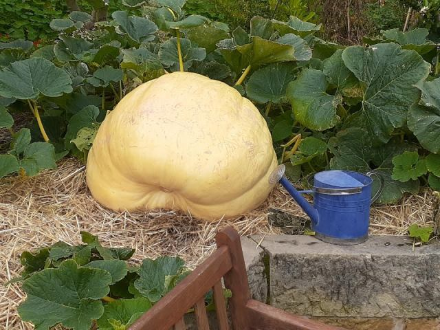 Giant pumpkin200320
