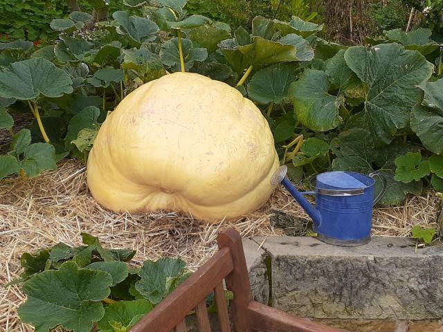 Giant pumpkin200320
