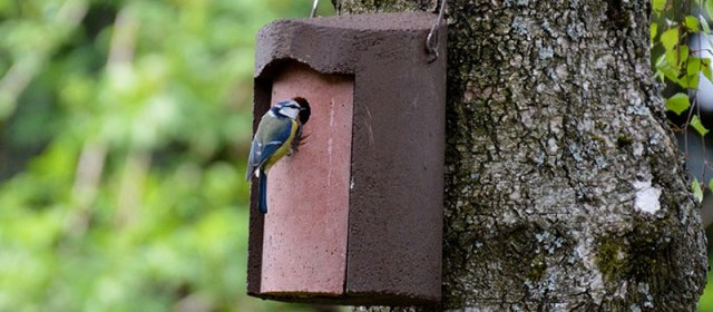 bird-box-category