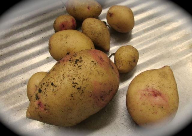 Marys potatoes